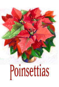 poinsettias_1257c